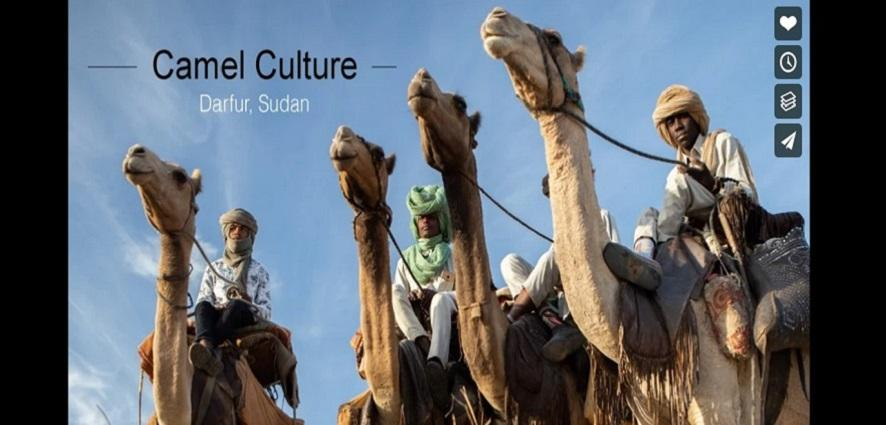 Camels Carousel